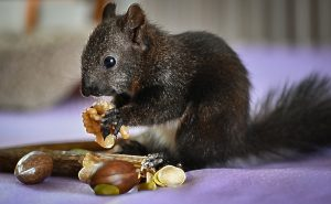Read more about the article The Nutritional Value Of Nuts Not For Everyone